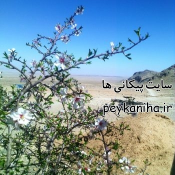 حوضچه های محمد نوجوان پیکان
